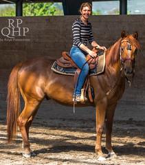 999A3932 (RPQHP) Tags: horses horse pferde arbeit pferd halle reiten longe ausbildung einreiten
