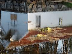 Water elf (annechr) Tags: reflection water boathouse speiling borgundgavlen