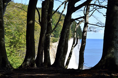 "C.D.Fs World IV... (farsighted.as ""MY PASSIONS"") Tags: ocean sea cliff tree nature landscape island coast meer mare baltic insel root rgen ostsee steilkste kreidefelsen whitecliff cdfriedrich cliffcoast"