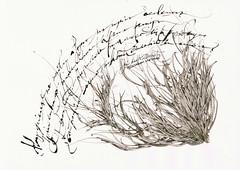zaratustra-certificado (jorge_regueira escrito a mano) Tags: calligraphy nietzsche caligrafa zaratustra
