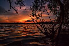Summer Solstice 2016 - No Words (Jacqueline C. Verdun) Tags: sunset summer lake reflection tree water kent nikon michigan solstice kensington extraordinary verdun d810