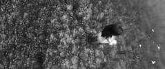 enb 2016_06_24 15_54_30_32 (stac016) Tags: jolene skyrim sexy water stream butt bw cute leaf rock caustic grass boris caustics voronstov enb enbseries rudy