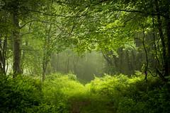 20160605 (Homemade) Tags: trees ny newyork green nature grass woods westchestercounty southsalem lewisboro nikkor2470mmf28 nikon2470mmf28 onatrufarmpark