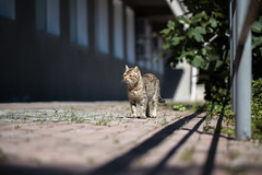 Street cat 148 (Yalitas) Tags: pet cats cat canon kat feline chat kitty gato felino katze katzen kot kedi kass gatta streetcat kotka  kocka  katte  katzchen kottur
