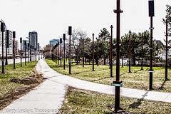Urban Planning ??? (Marty 1955 ...) Tags: city trees urban lights quebec stupid insanity hull