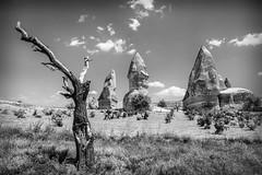 Tree and Fairy Chimneys in Goreme (Sean X. Liu) Tags: blackandwhite blackwhite monochrome trees rocks fairychimney goreme cappadocia turkey