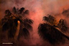 HEAVENLY PALM TREES. (Viktor Manuel 990) Tags: sky mxico clouds surrealism digitalart palmeras palmtrees artedigital sanmiguelallende victormanuelgmezg guanjuato