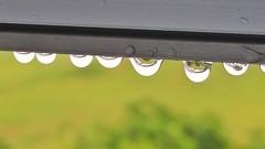 Rain drops (tomquah) Tags: water rain raindrops waterdroplets lgg4