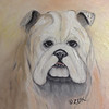 Bulldog (Karen Zuk Rosenblatt) Tags: portrait orange dog pet pets dogs animal animals tongue portraits square mammal rust teeth rusty canine bulldog mammals bulldogs jowls canines