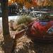 Fall in Ukiah