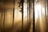 DSC_0260 (jannis.dietrich) Tags: wood autumn light tree nature forest 50mm nikon d5300 epiclight