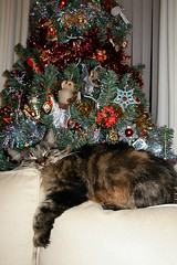 Comfy Christmas (madlily58) Tags: christmas decorations holiday cat festive christmastree baubles tabbycat