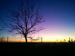 (a.m.a. (alb_yester)) Tags: sunset espaa tree arbol spain phone cell ocaso 920 lumia