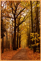 Herbstliche Stimmung.-Autumnal mood. (Karabelso) Tags: road autumn trees fall nature leaves forest germany sony laub herbst natur sachsen zwickau wald baum waldweg graurock schneppendorf