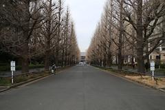Keio Univ. (M. Mikamo) Tags: winter japan kangawa keiouniversity