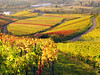Autum Vineyards Germany (Habub3) Tags: canon germany deutschland vineyard herbst powershot g12 2014 weinstadt habub3