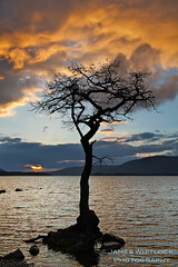 Fire in the Sky (James Whitlock Photography) Tags: winter sunset sky orange cloud lake storm colour tree stone canon fire colorful alone moody sigma shore 7d 1750 loch lomond hitech balloch isolated balmaha milarrochy