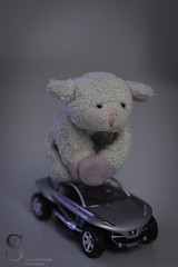 Bahbahrah goes for a drive (Singing With Light) Tags: morning november toy photography sheep pentax ct movember 27 magnet fridgemagnet k5 k3 2013 miilford bahbahra singingwithlight singingwithlightphotography unstashers