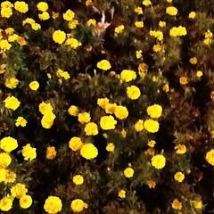 Hidden  (haidarism (Ahmed Alhaidari)) Tags: flowers plants nature animal cat puzzle hidden