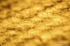 Our (not so) favorite kitchen tool (JReedPhotos1) Tags: macro kitchen yellow sponge extentiontubes fotodiox photochallenge2015