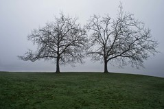 Two Trees (sunrisesoup) Tags: seattle trees usa fog wa sewardpark