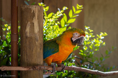 """Parrot • <a style=""""font-size:0.8em;"""" href=""""http://www.flickr.com/photos/92159645@N05/16048889959/"""" target=""""_blank"""">View on Flickr</a>"""