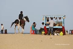 (pathikdebmallik) Tags: ocean sea horse india soup chennai rider seashore