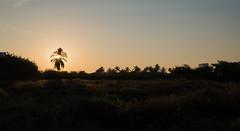 Acapulco Sunrise (Gianpaolo Fusari) Tags: sky sun beach sunrise palms mexico paradise pacific horizon panasonic palmtrees acapulco goldenhour guerrero revolcadero lumixgx7 lumixgvario1442f3556ii