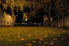 sleymaniye (flatteryfairy) Tags: autumn leaves night mosque gece sonbahar gz