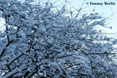 Landschaften114 (Tommy Berlin) Tags: winterlandschaft