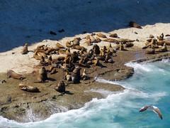 Puerto Madryn-1