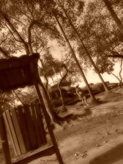 Quinta da Boa Vista, Rio de Janeiro. (Rui Lemes) Tags: rio de nikon janeiro boa da coolpix vista quinta p600 ruilemes
