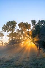 Sunburst (jactoll) Tags: trees light mist misty zeiss sunrise landscape dawn sony sunrays warwickshire studley a6000 jactoll 1670f4