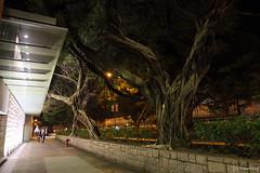 Tsim Sha Tsui (tomosang R32m) Tags: night hongkong  kowloon    yaumatei fruitmarket