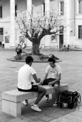 L'albero e le girandole (sirio174 (anche su Lomography)) Tags: como tree albero teatrosociale piazzaverdi alberello miniartexil