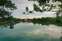 2016-05-14 18.02.51 (pang yu liu) Tags: park ecology pond 05 may daily eco pate    2016