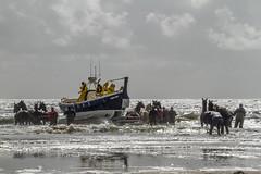 2016-Ameland051 (Trudy Lamers) Tags: wadden ameland eiland paarden reddingsboot reddingsactie