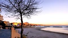 Tree at the beach (Riccardo CLOD) Tags: sunset sea sky tree beach sand