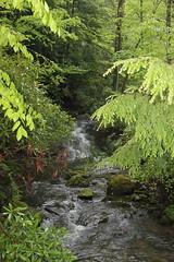 IMG_0391 (rob02190) Tags: franklloydwright pa fallingwater