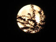 MOON THRO THE BUSHES (RON1EEY) Tags: sunset summer moon bike cat scotland jets fullmoon lunar sunray jettrails jetengines sunsetscotland moonrisemay