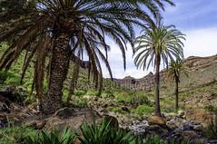 Amurga - Isla de Gran Canaria - ROF3709-20090110w (Ramonof) Tags: canarias canaryislands canarias3d imágenescanarias