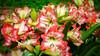 Amaryllis Belladonna (raveclix) Tags: india canon amaryllisbelladonna belladonnalily canonefs1855mmf3556 incredibleindia canoneos400d digitalrebelxti raveclix