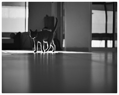 Home's visible soul (Mister Blur) Tags: blue light blackandwhite home cat 35mm happy furry nikon bokeh low depthoffield pointofview soul visible 18 friday russian hff d7100 littledoglaughednoiret