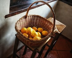 Golden lemons in sunset light (Мaistora) Tags: lemon fruit citrus yellow golden basket kitchen window light sunlight sunset stilllife nature naturemort