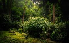 Deep Green Morning (David Haughton) Tags: park morning trees summer green nature leaves forest woodland woods warm natural bushes humid
