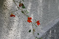 Flower  Orange (sb.estate) Tags: orange sun flower yellow sommer grean collor summ