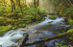 Panther Creek (Angie Vogel Nature Photography) Tags: panthercreek woods nature runningwater moss trees creek foreststream