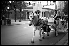 beast_of_burden (peterjcb) Tags: street leica horse photography 50mm nc carriage charlotte bokeh f14 m monochrom summilux asph blackchromeedition