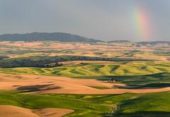 The noise formulates the approval. (TheRealMichaelMoore) Tags: 2016 colfax palouse steptoe steptoebutte washington farm fields hills landscape rainbow storm wheat unitedstates