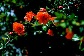 Red Flowers in the Nigth ...